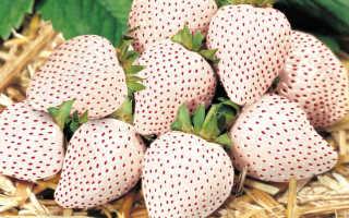 Чем подкормить рассаду земляники, выращенную из семян?