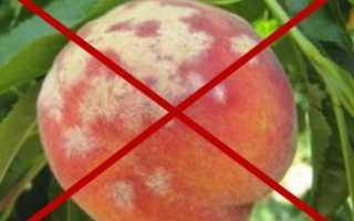 Как хранить персики?