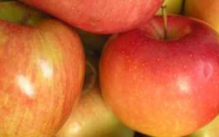 Яблоня Строевское — описание сорта, фото, отзывы