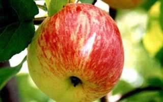 Яблоня Боровинка — описание сорта, фото, отзывы