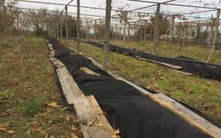 Особенности ухода за виноградом от весны до осени