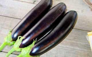 Баклажан Длинный Фиолетовый — описание сорта, фото, отзывы, посадка и уход