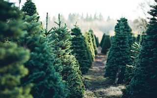 Зимняя посадка деревьев: преимущества и недостатки