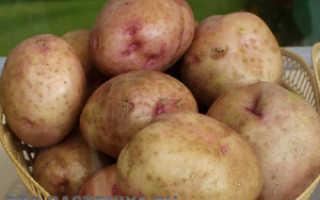 Лучшие семена элитных сортов картофеля