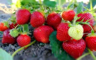 Уход за клубникой летом после плодоношения