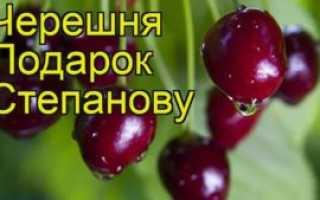 Черешня Подарок Степанову — описание сорта, фото, отзывы садоводов