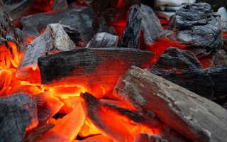 Древесный уголь как удобрение для огорода, применение подкормки при выращивании растений