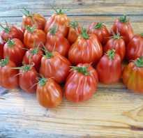Томат Ругантино — описание сорта, отзывы, урожайность