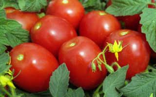 Томат Новичок — описание сорта, отзывы, урожайность
