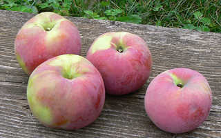 Яблоня Брянское — описание сорта, фото, отзывы
