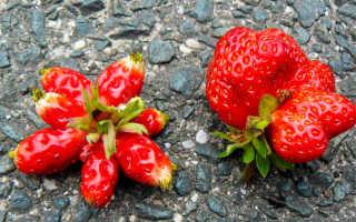 Почему корявые ягоды у клубники?