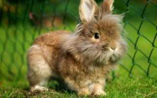 Пенициллин для кроликов: куда колоть, как разводить и давать