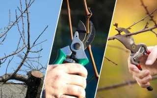 Как обрезать грушу весной — схема
