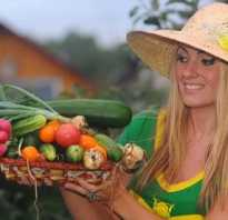 Груша Просто Мария — описание сорта, фото, отзывы садоводов